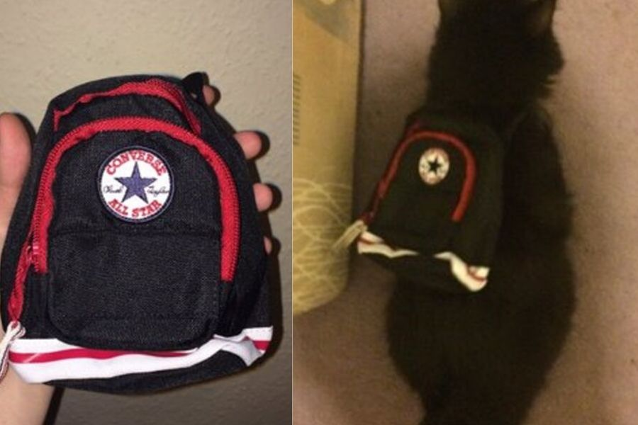 cat with back pack