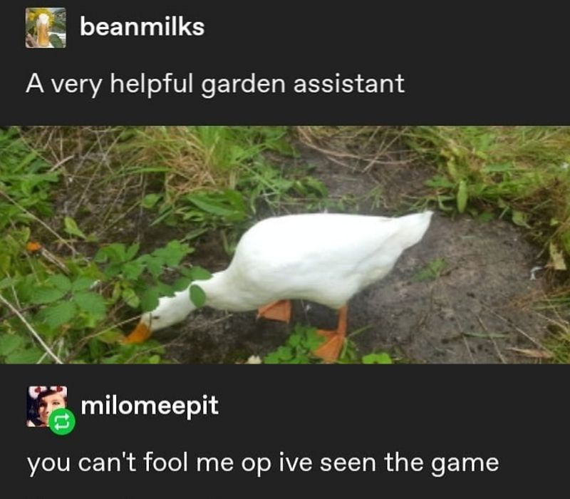 goose game in real life
