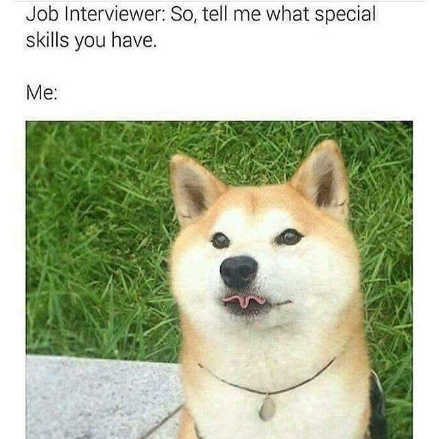 Job interviewer: so, tell me what special skills you have? (photo of dog folding tongue)