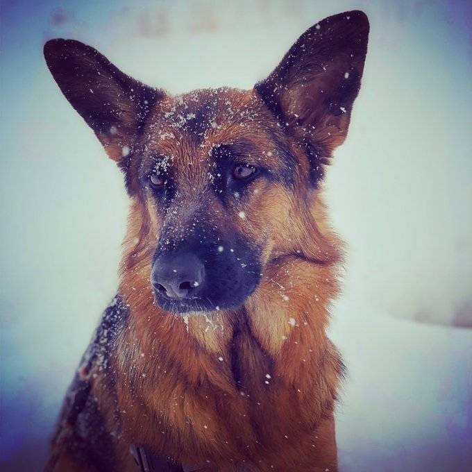 bizzy the dog in the snow