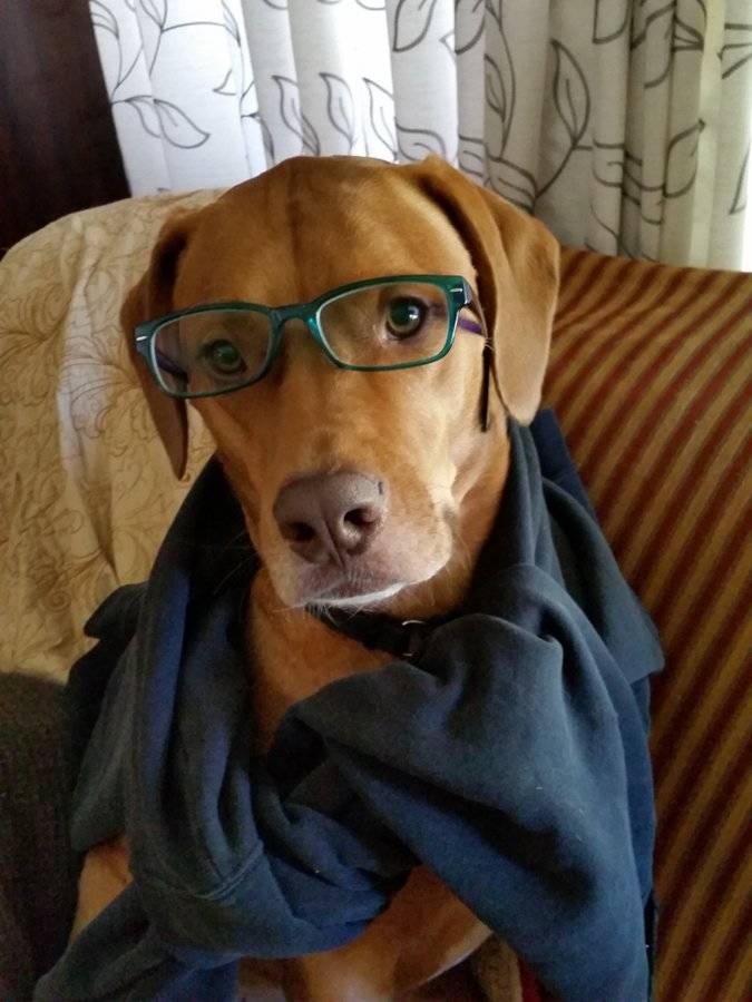 cooper the dog with glasses