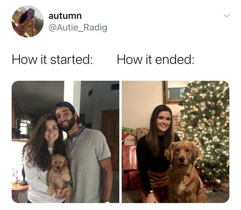 How it started: couple holding golden retriever puppy vs. How it's ended: woman alone with adult golden retriever