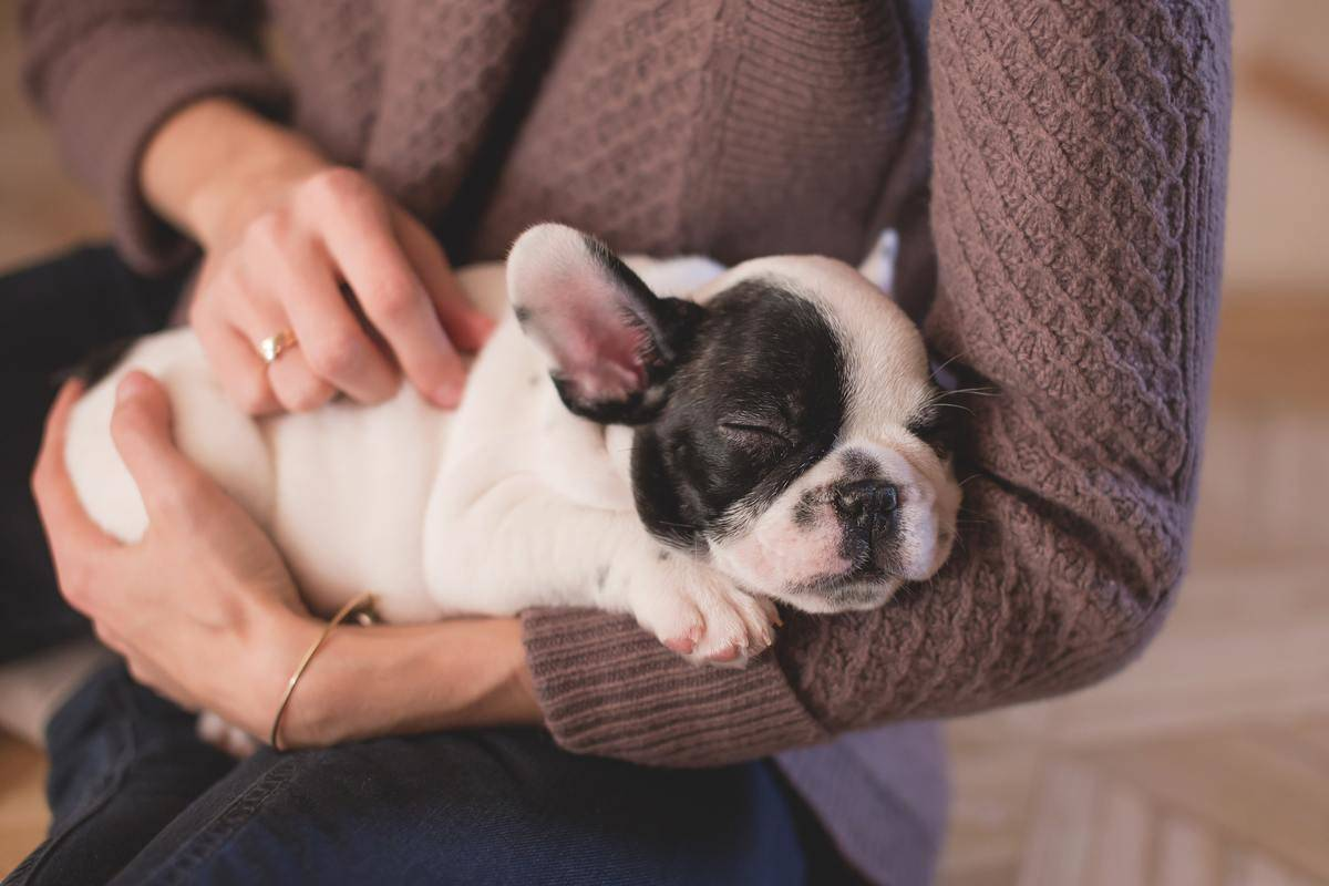 puppy asleep in arms