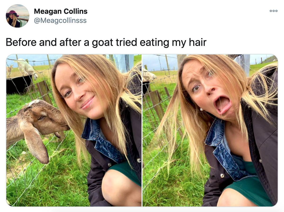 a goat eating a woman's hair