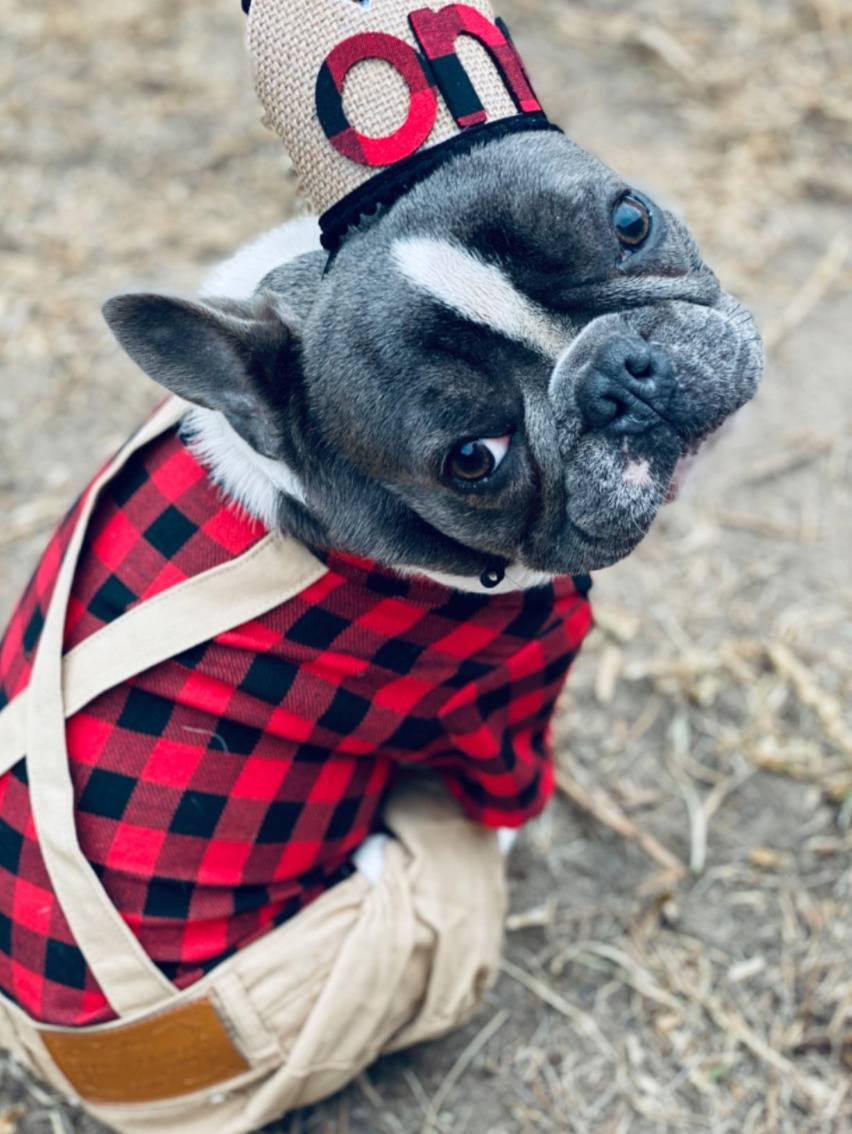 a lumberjack costume for dogs