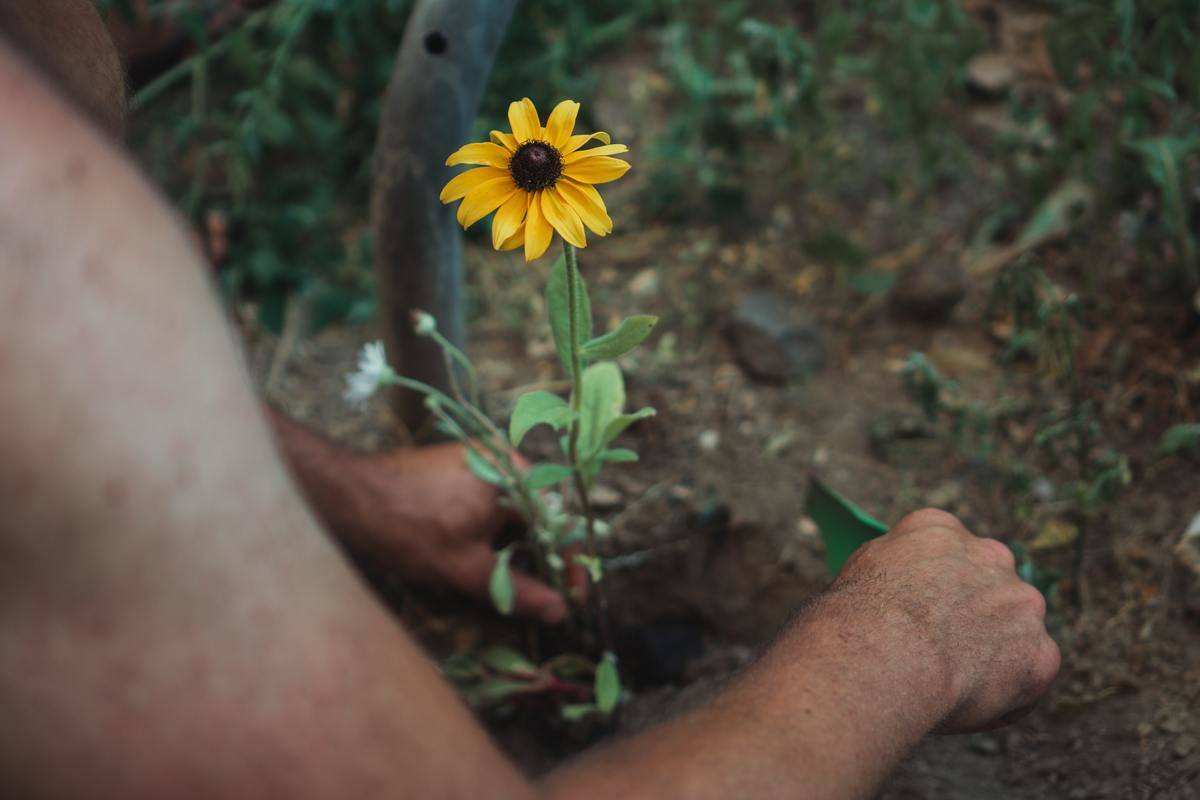 planting a yellow flower