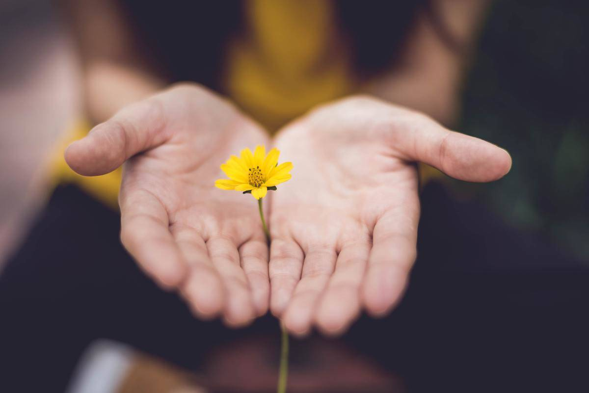 woman holds out yellow flower in her hand