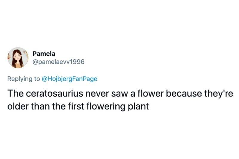 Tweet: The ceratosaurius never saw a flower because they're older than the first plant