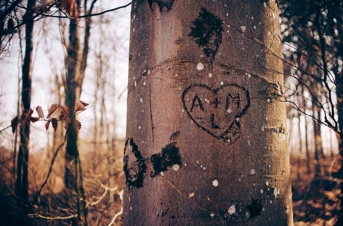 initials in heart carved into tree