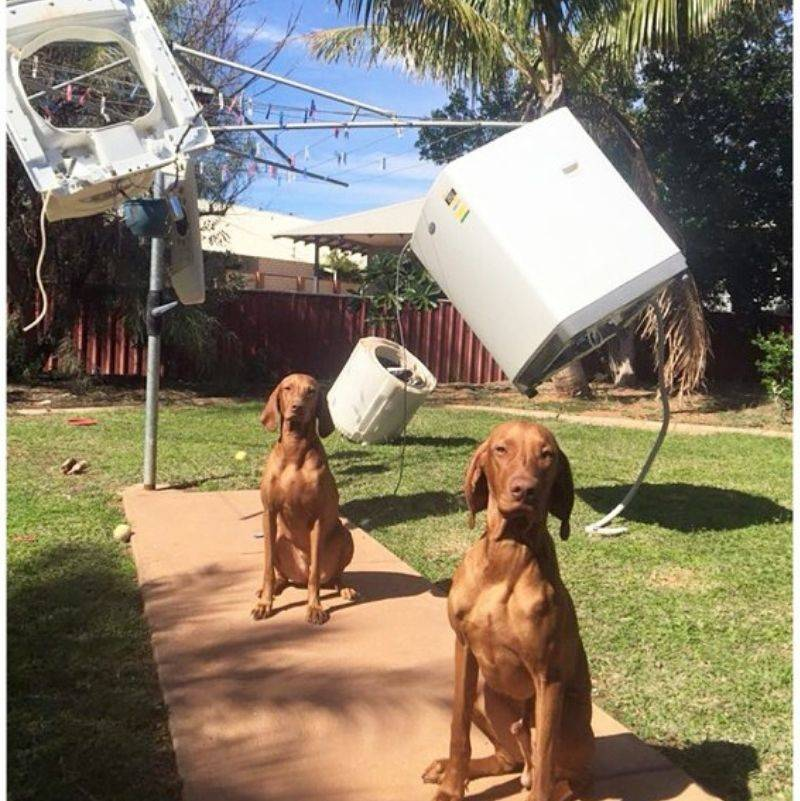 a washing machine hanging on a clothes line in parts with two dogs sitting underneath