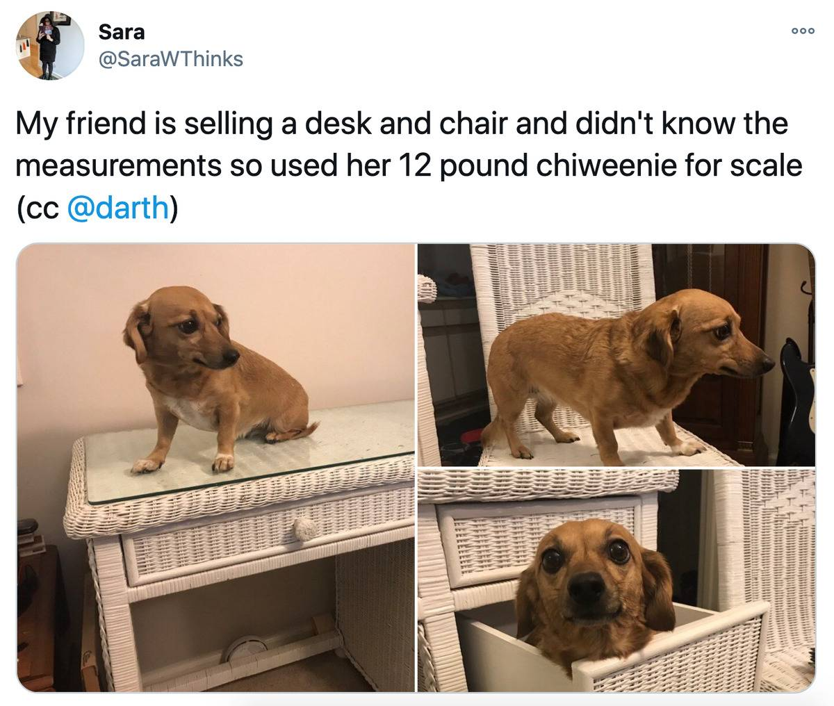 Tweet: My friend is selling a desk and chair and didn't know the measurements so used her 12 pound chiweenie for scale