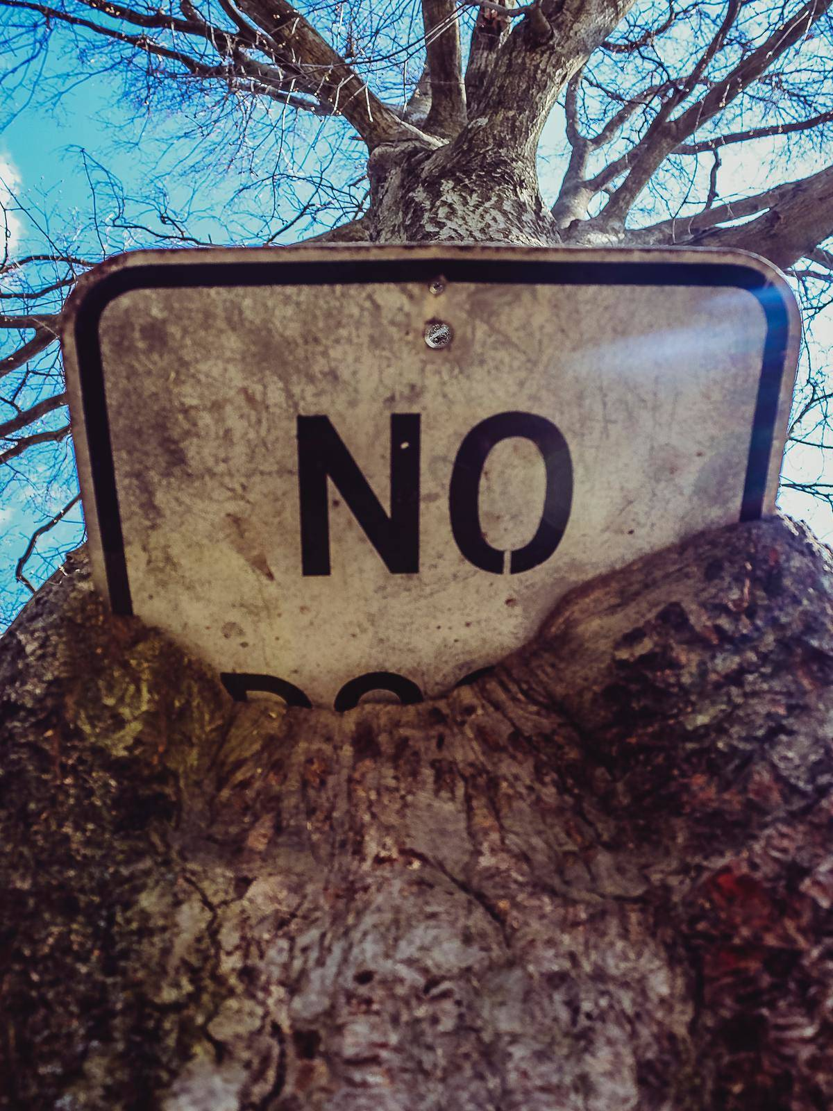sign that is half-covered by tree reads just
