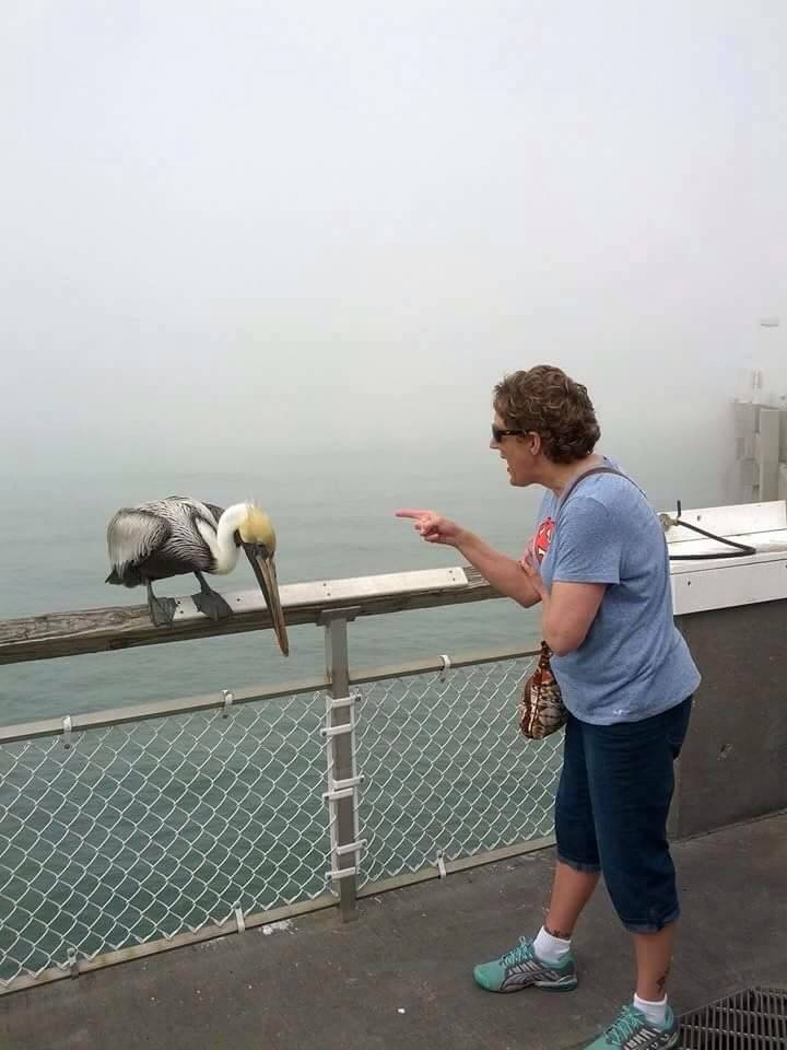 someone's mom get bit by a pelican and so she began to scold it
