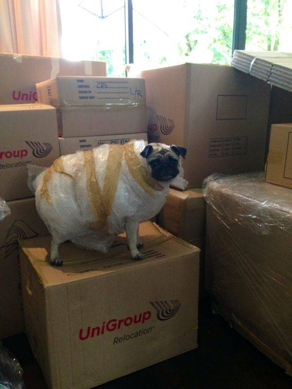 sister helping them pack by bubblewrapping the pug