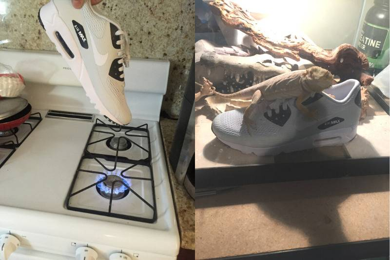 sibling sending picture of new shoes held over the stove and hidden in lizard cage