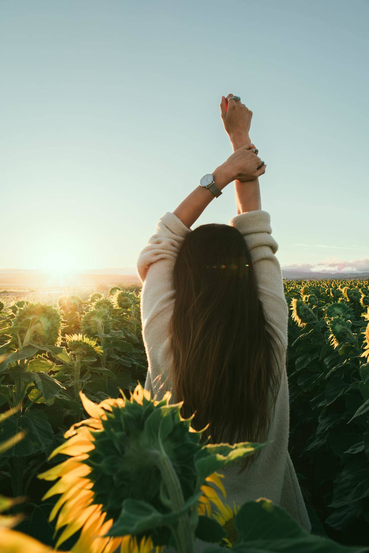woman standing in front of rising sun in sunflower field