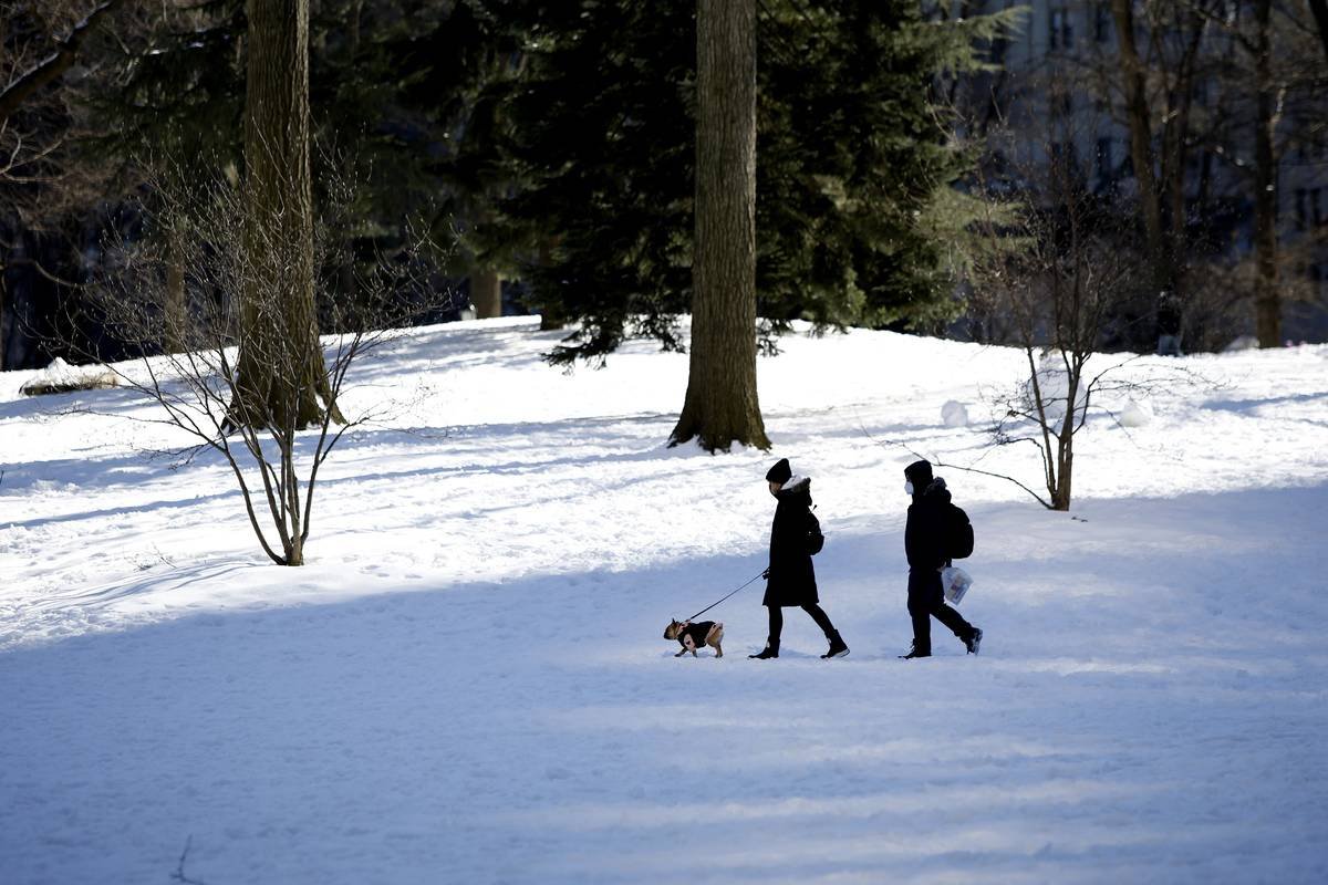 Sunny day before more Snow iA couple walks whit a dog in Central Park covered by snow and ice on February 21, 2021 in New York City. The big apple waits this Mondays expecting in New York