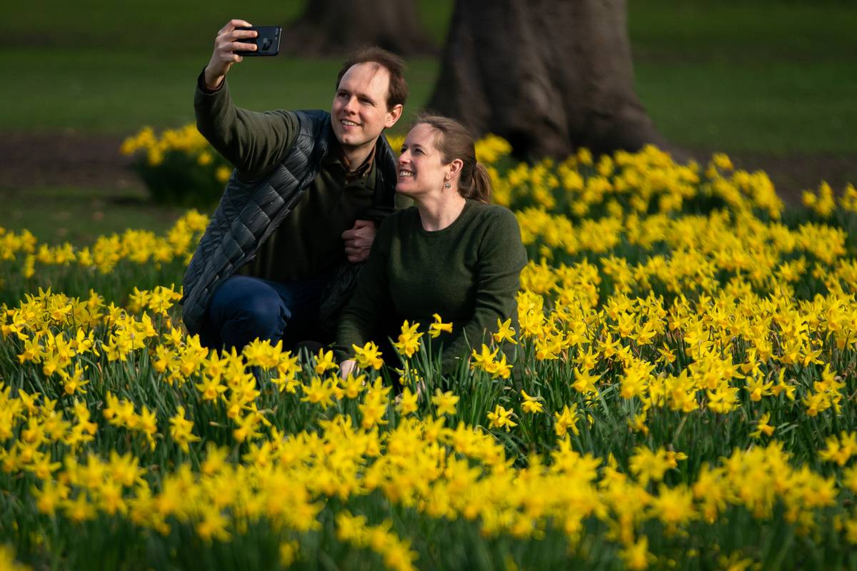 A couple takes a photo amongst daffodils in St James's Park, London, with forecasters predicting