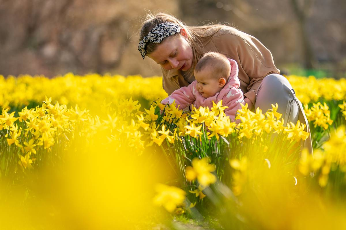 Mother Marina and baby Vivienne (no last name given) amongst daffodils in St James's Park, London,