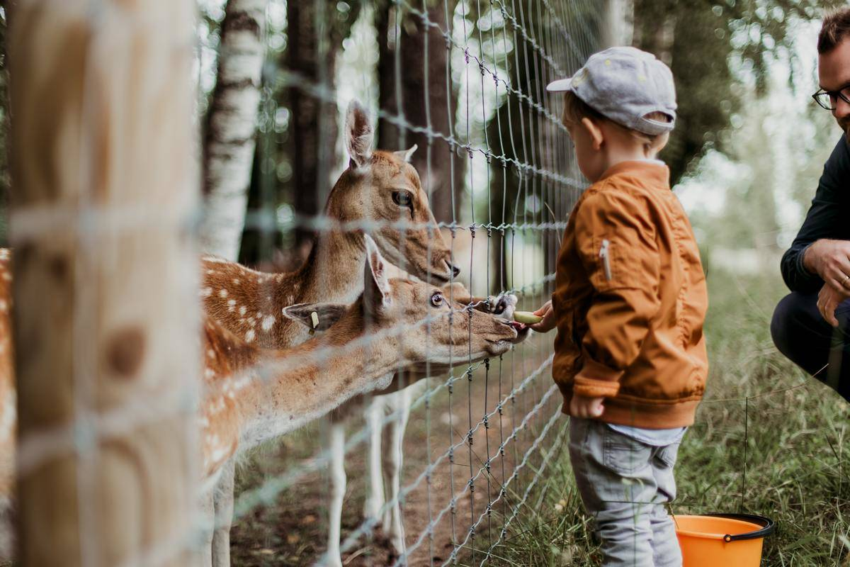kid playing with animals at the zoo