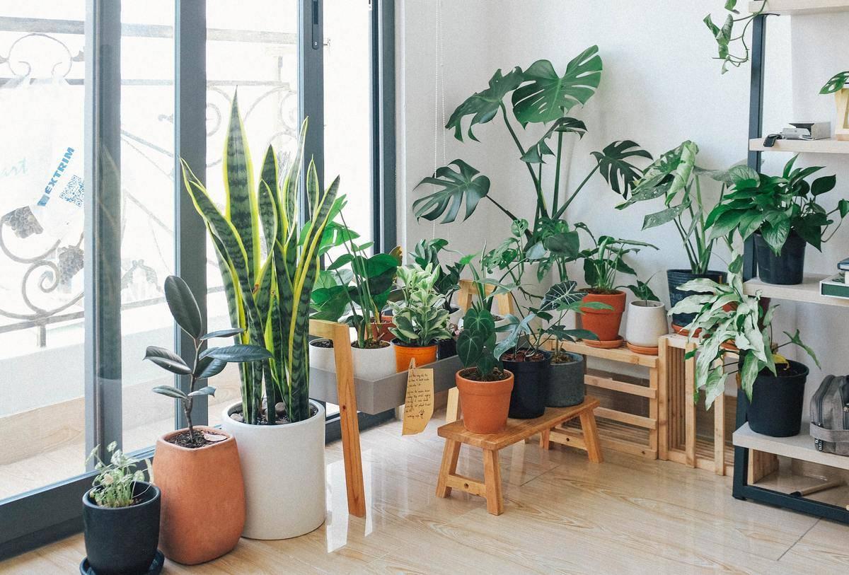 large plants in window