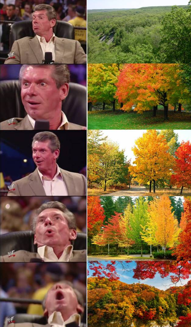 Guy whose face gets more excited as pictures of trees become more autumn-y