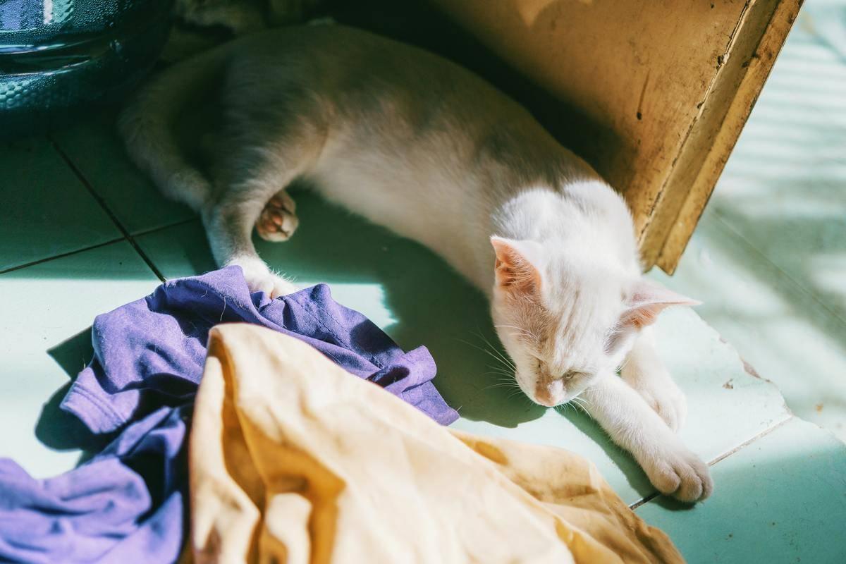 Cat lying asleep with laundry on floor