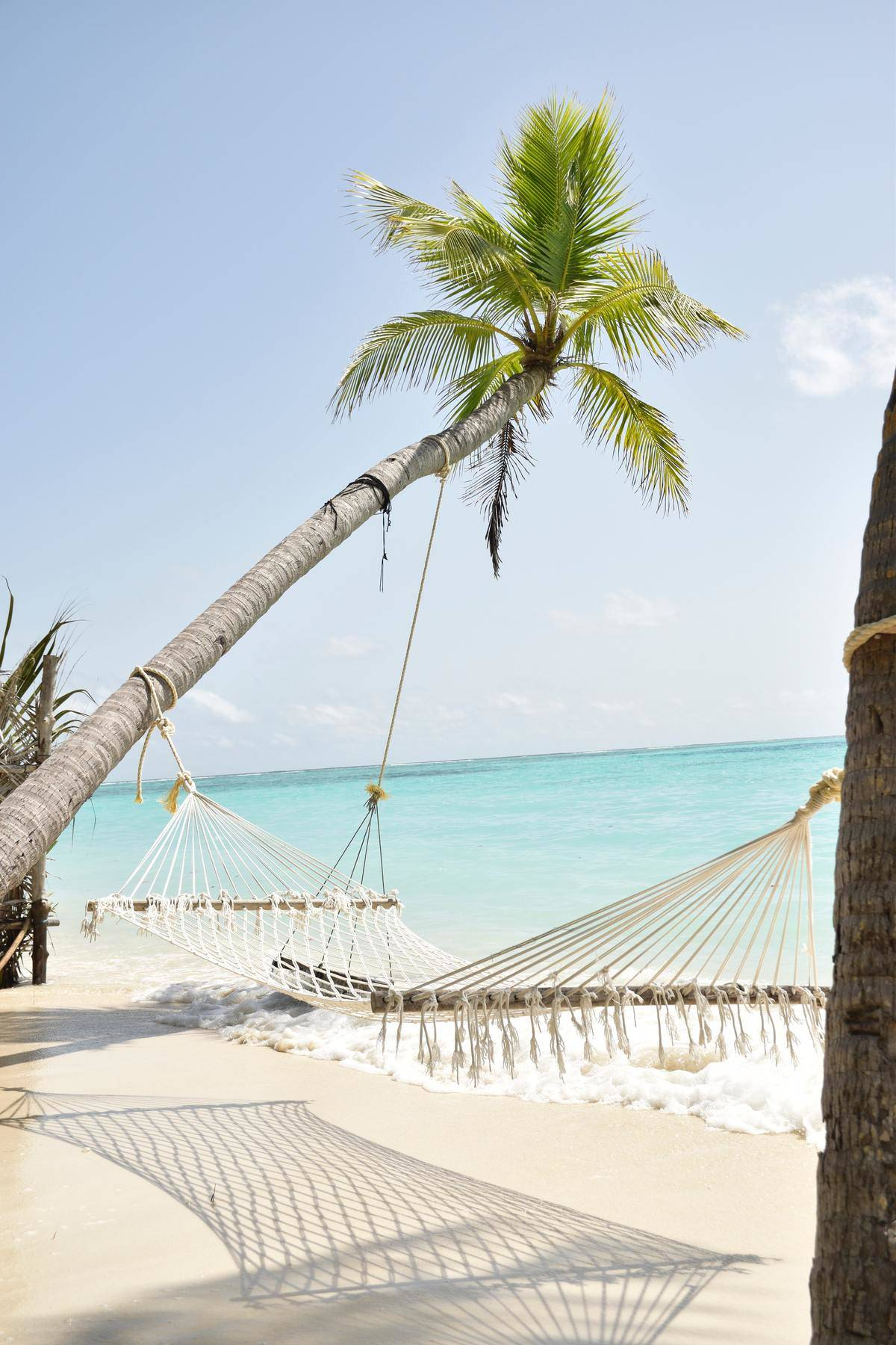 Hammock secured to palm trees