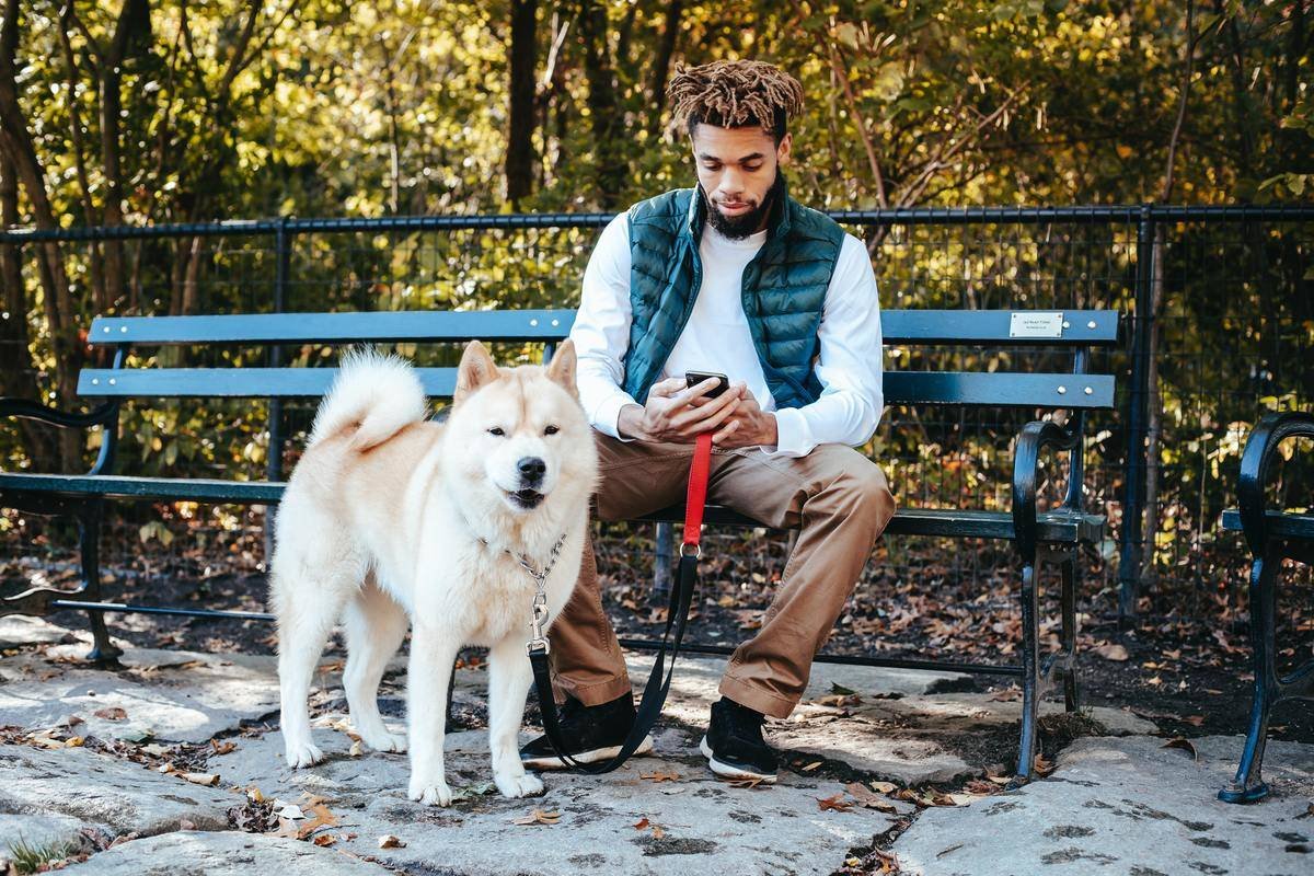 Man on phone with dog on park bench